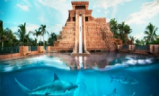 Discover Bahamas  / 13 Zile